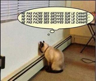 """Résultat de recherche d'images pour """"humour chat noir"""""""
