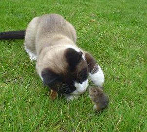 chat de rencontre gratuits