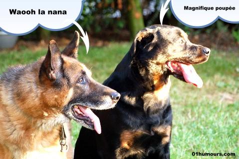 humour chien septembre 2009 humour photos image drole et video insolite blagues humour noir. Black Bedroom Furniture Sets. Home Design Ideas