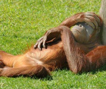 Humour comique septembre 2011 humour photos image - Chanson j ai attrape un coup de soleil ...