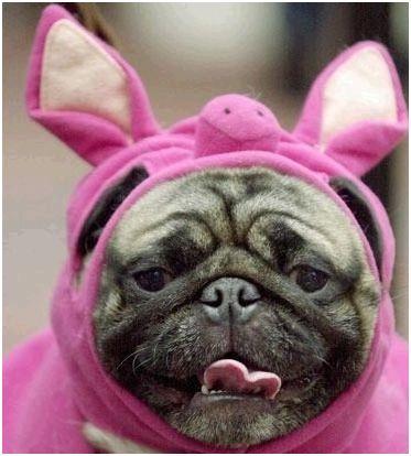 Tete de cochon - Tete de cochon a colorier ...