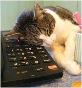 Photo et video de chatte