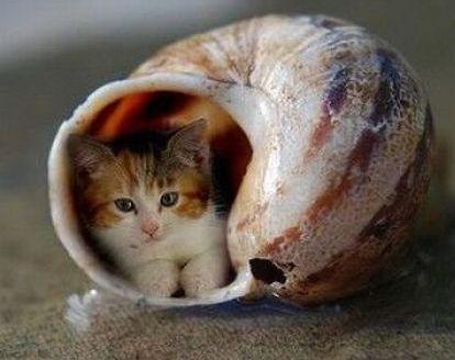 """Résultat de recherche d'images pour """"photos comiques escargots"""""""